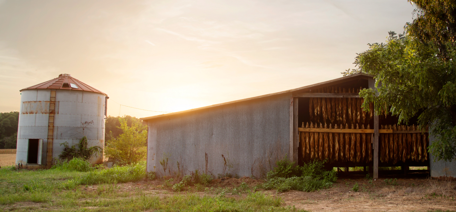 barn with sunset